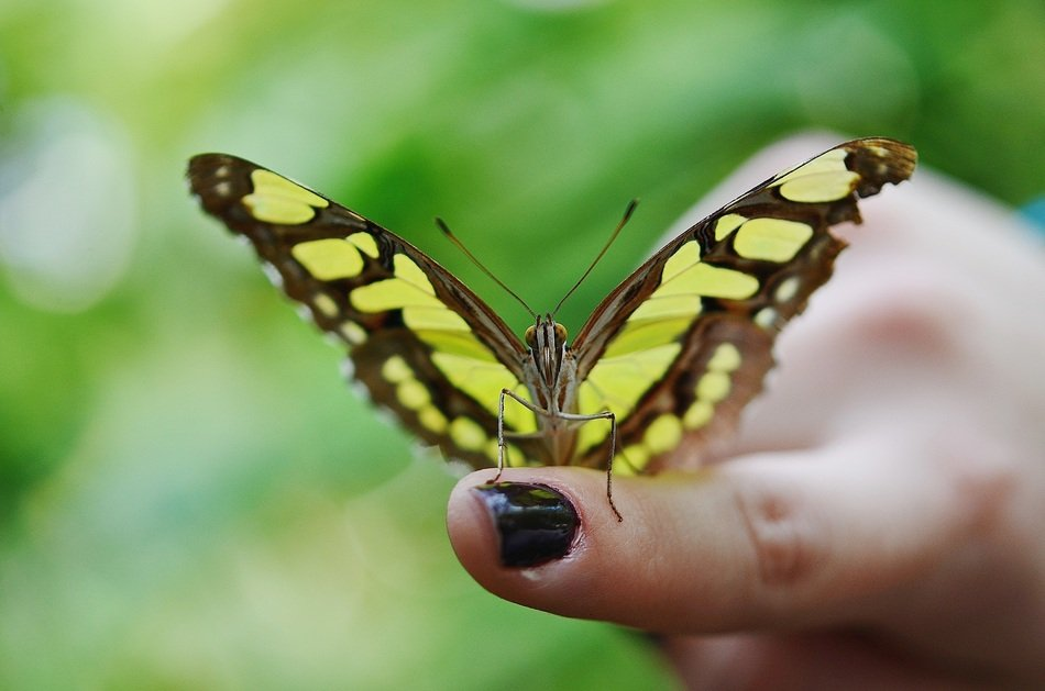 yellow brown butterfly on the finger