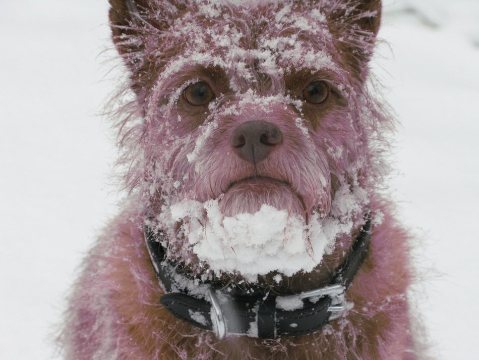 photo of the dog in a snow