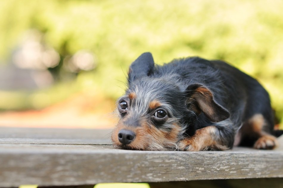 black puppy on a wooden bench