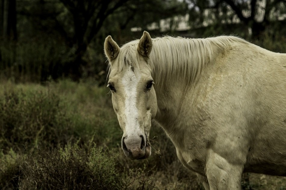 white horse in natural environment