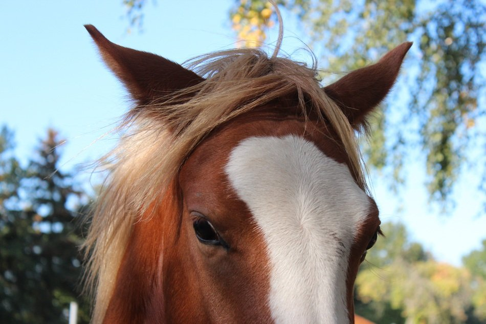 portrait of a farm stallion