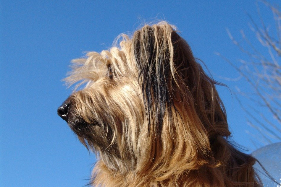 melancholy dog on a clear sky background