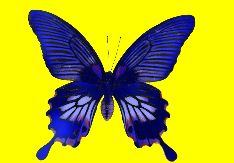 painted blue butterfly on a yellow background