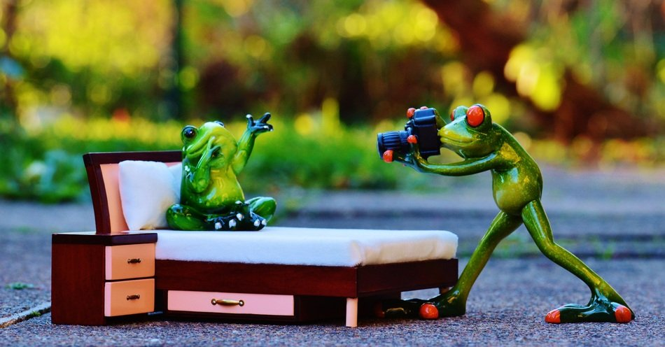 cute frogs photo shoot
