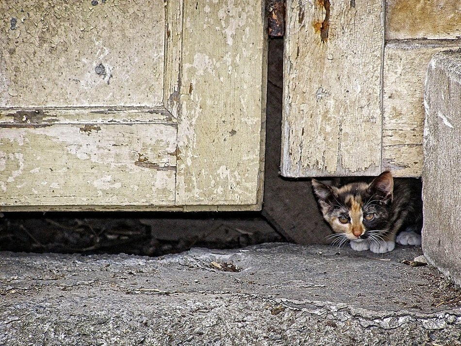 Cat under the door