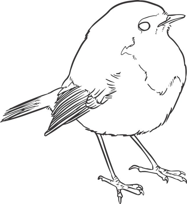 black and white drawing of a bird on a white background
