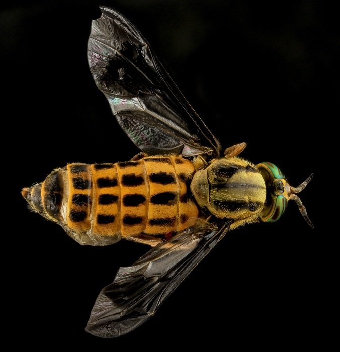 yellow fly on a black background
