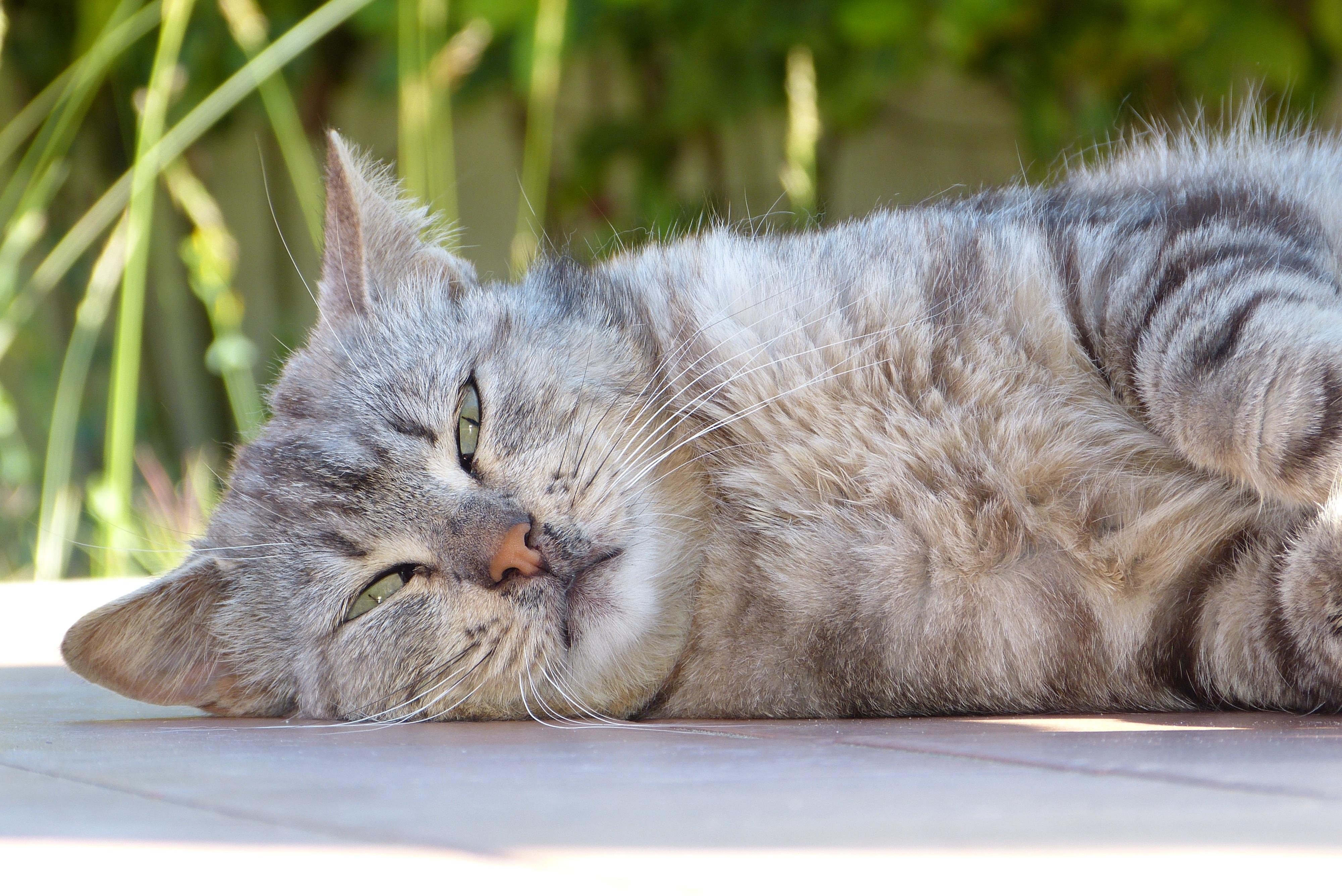 Natural things to keep cats away
