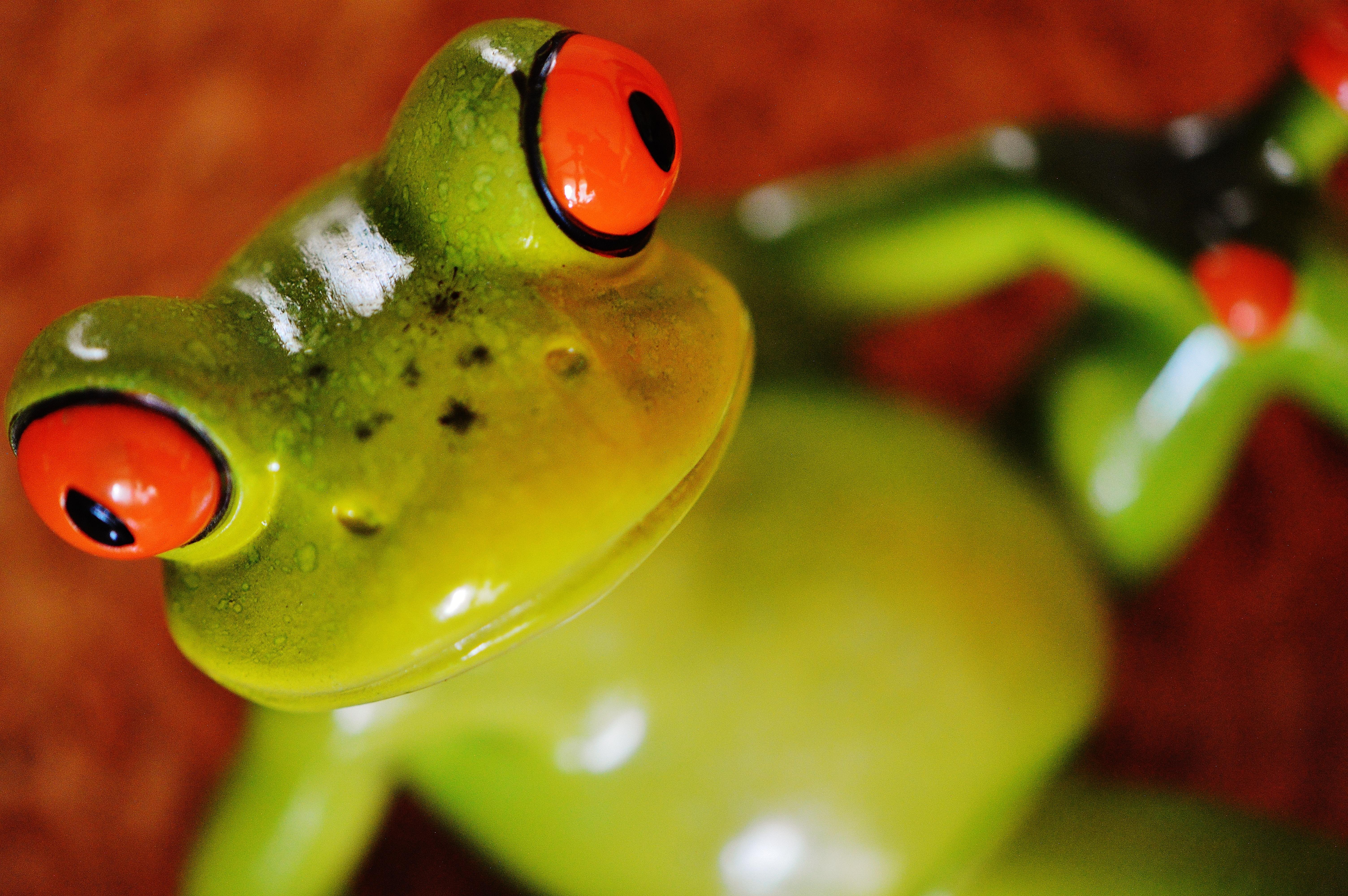 Картинки смешная жаба