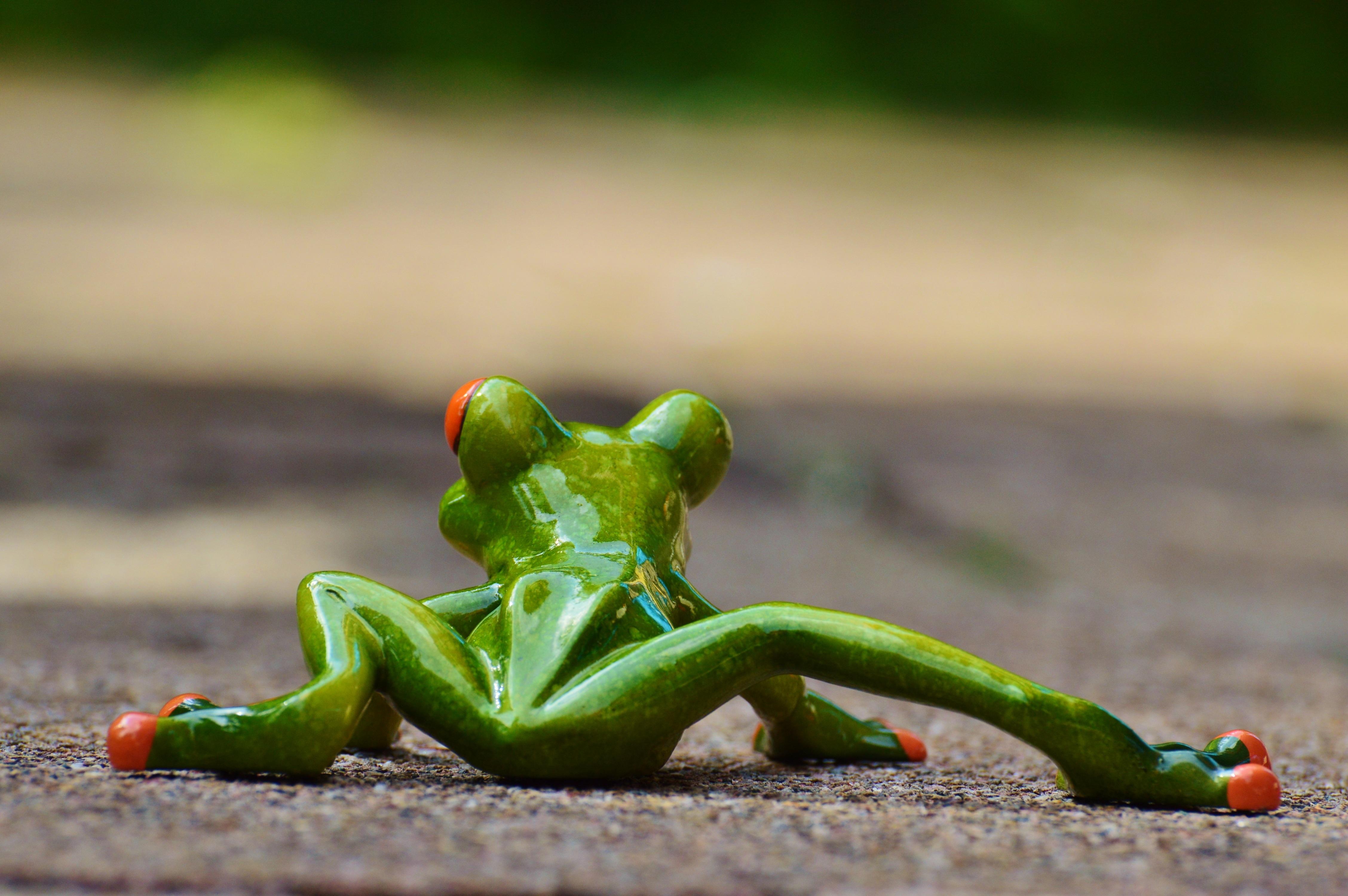 Картинки смешные с лягушками