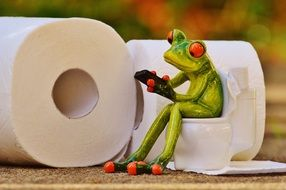 funny frog in toilet