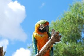 colorful tropical parrot in nature