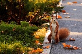 squirrel standing on his hind legs