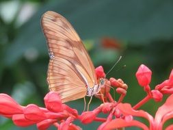 butterfly on a pink exotic flower