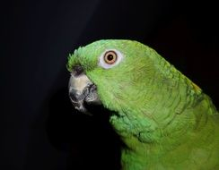 green exotic parrot at night