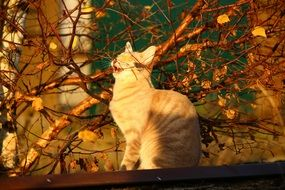 red cat in autumn foliage in evening