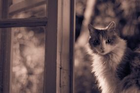 fluffy white grey cat sitting on the window
