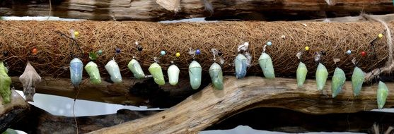 header with butterfly cocoons