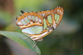 green orange butterfly in wildlife