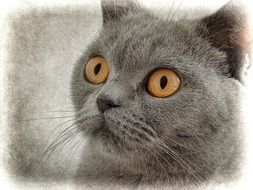 cute grey Cat Drawing