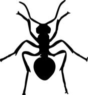 Illustration of black ant