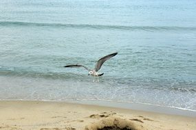a seagull is flying over the beach
