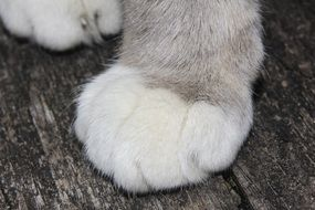 paws of a cat on a bench
