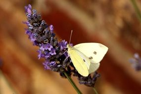 white butterfly on a purple flower