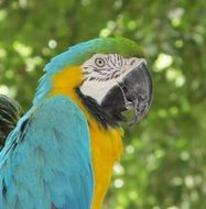 profile portrait of a macaw parrot