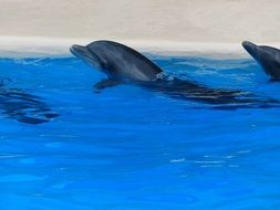 dolphin show in water