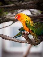 colorful beautiful parrot on a branch