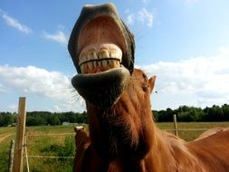 horse head with teeth