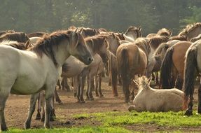 herd of farm horses