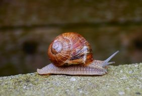 brown snail is crawling on the yellow stone