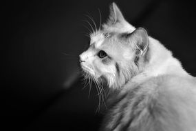 black and white photo of a cat close-up