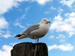sea bird against a blue cloudy sky