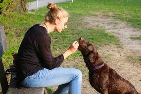 woman feeds a dog in nature