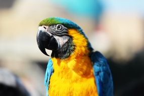 Color Parrot Bird