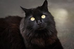 black cat with light eyes close up