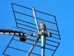 sparrow is sitting on a roof antenna