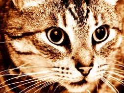 portrait of a domestic tabby cat