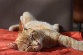 red cat sleeping on a red bedspread