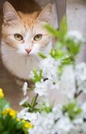 Cat and white flowers