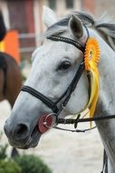 grey Horse head with award on bridle