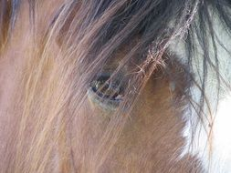 head of a horse with a long mane close up