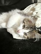 Beautiful, cute and colorful kitten lying on the side