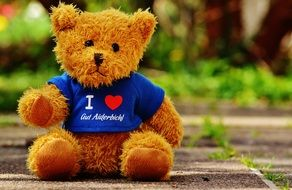 teddy bear in shirt