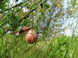 snail is crawling through the bush