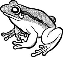 black and white drawing of a frog