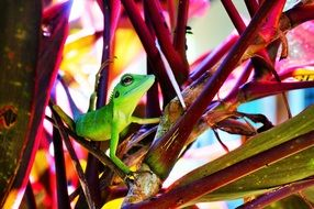 green lizard on a pink plant